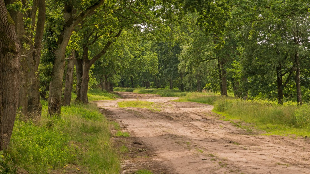 historischer Ochsenweg