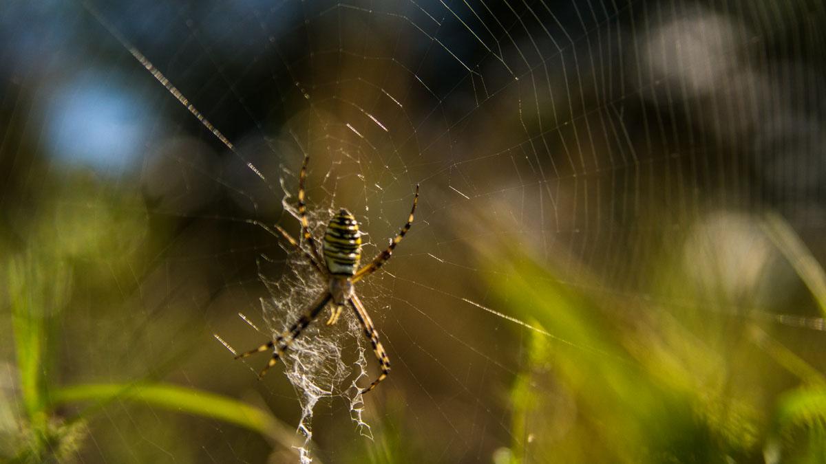 Spinnen am Wegesrand