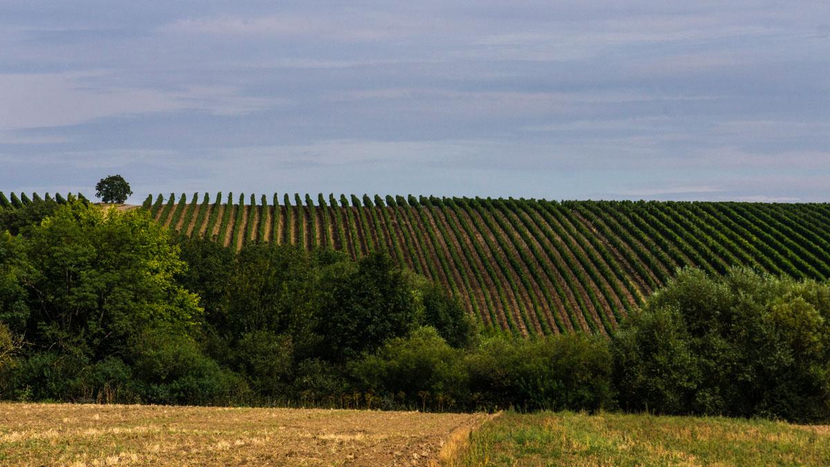Fränkisches Weinland bei Sommerach