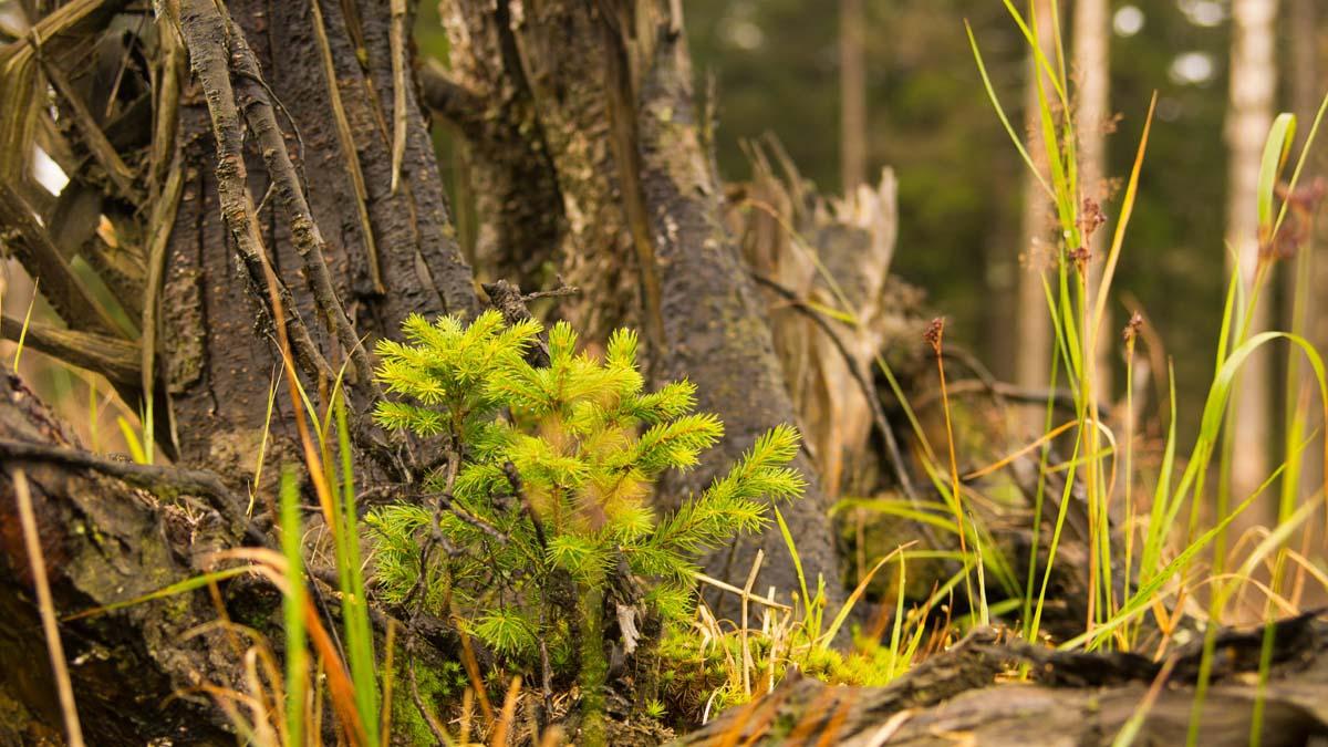 Im Nationalpark Harz