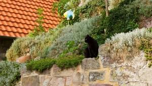 Schwarze Katze an der Werra