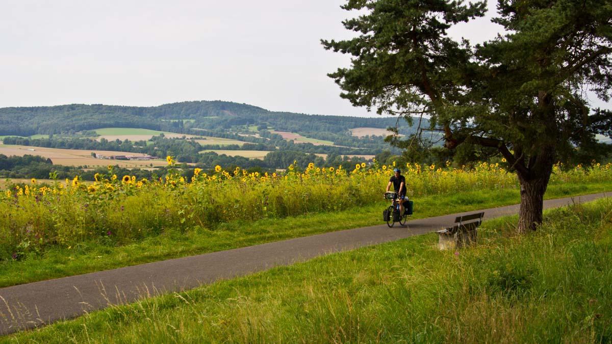 Sonnenblumenfeld in Nordhessen Radfahren