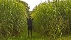 Miskantus ein Gras aus China soll unsere Energieprobleme löse