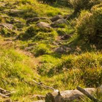 harz-wandern-2016-09-40-schmal