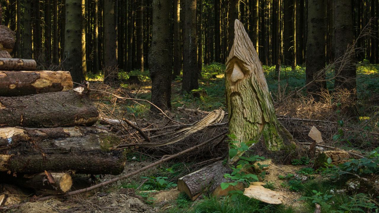 Wandern im Nationalpark Harz